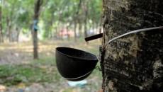 rubber-farmerssssssss