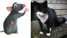 pamiston_cat